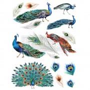 """Siirdepilt """"Peacock"""""""